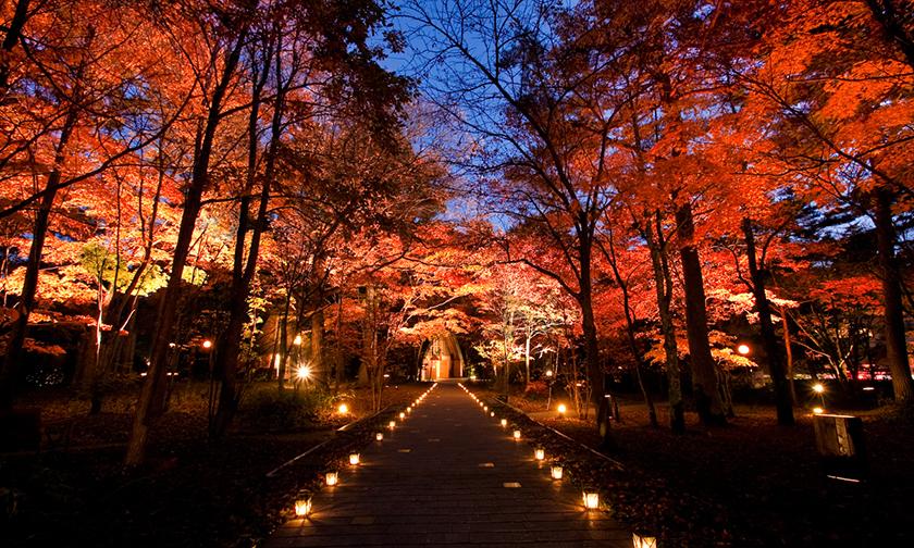 写真:色づく森を見上げる秋の夜 10/14~11/5 18:00~21:00