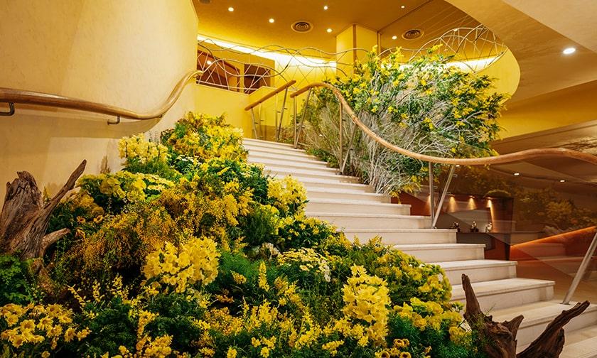 写真:ミモザが彩るホテル館内