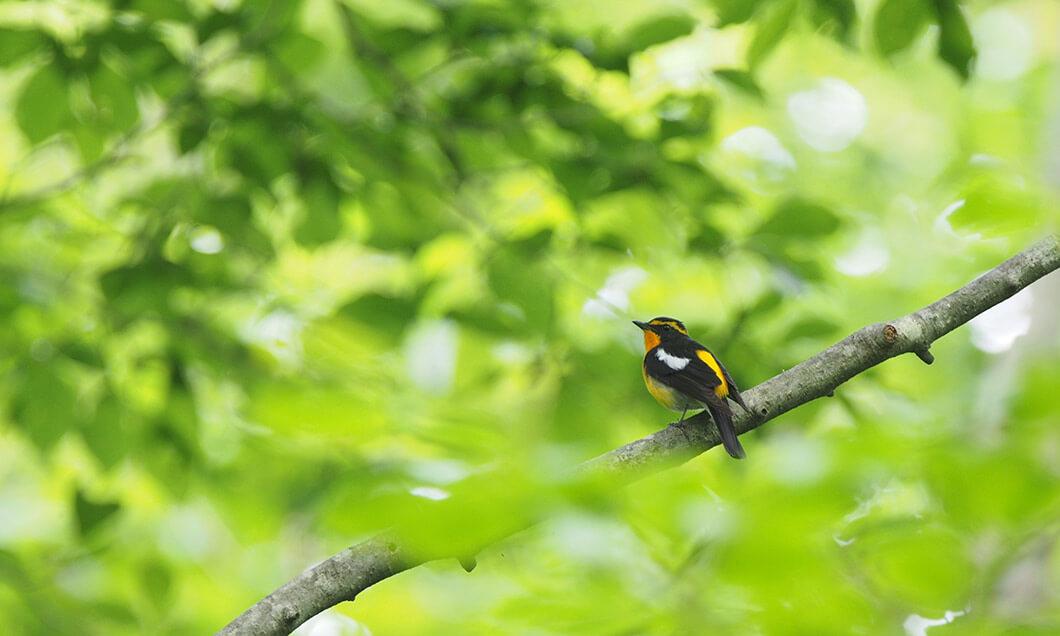 写真:野鳥の森ネイチャーウォッチング