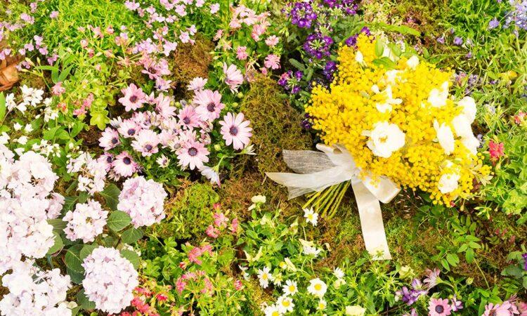 写真:ミモザ色のアシェット・デセール(3月限定・季節のデザート)