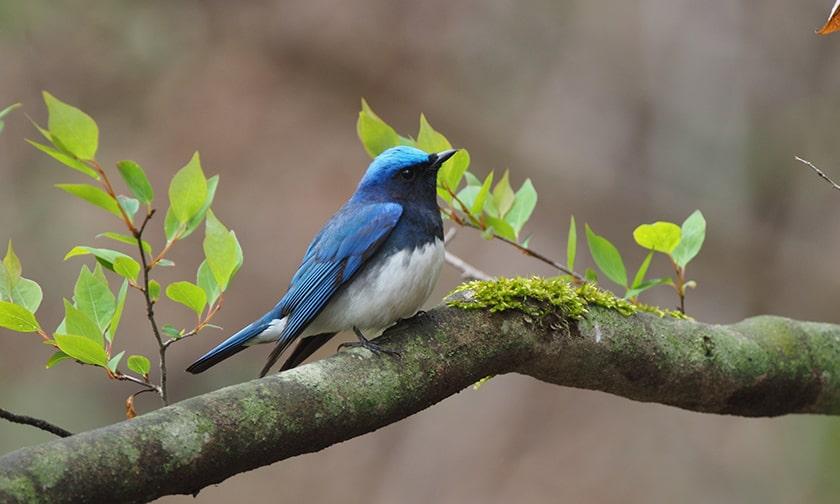 写真:「軽井沢野鳥の森」で幸せの青い鳥に出会う