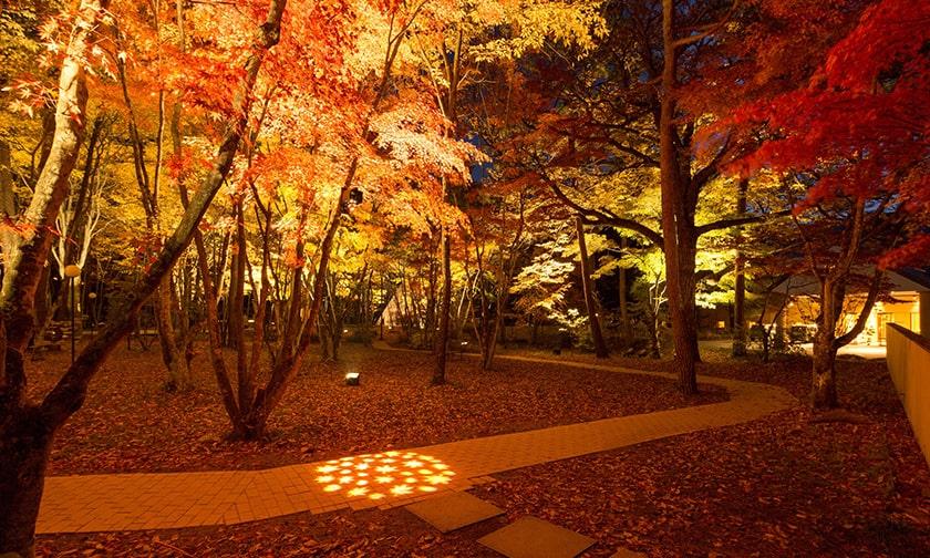 写真:色づく森を見上げる秋の夜