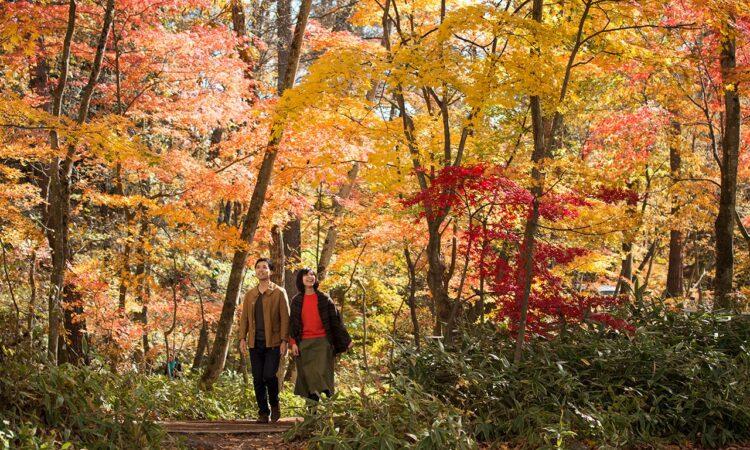 写真:軽井沢よくばり秋散歩プラン