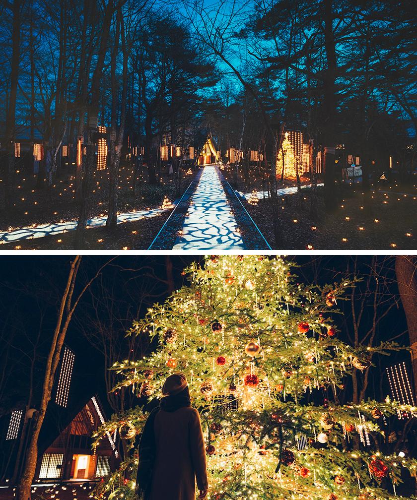 写真:やさしくあたたかな光 クリスマスイルミネーションと光の十字路